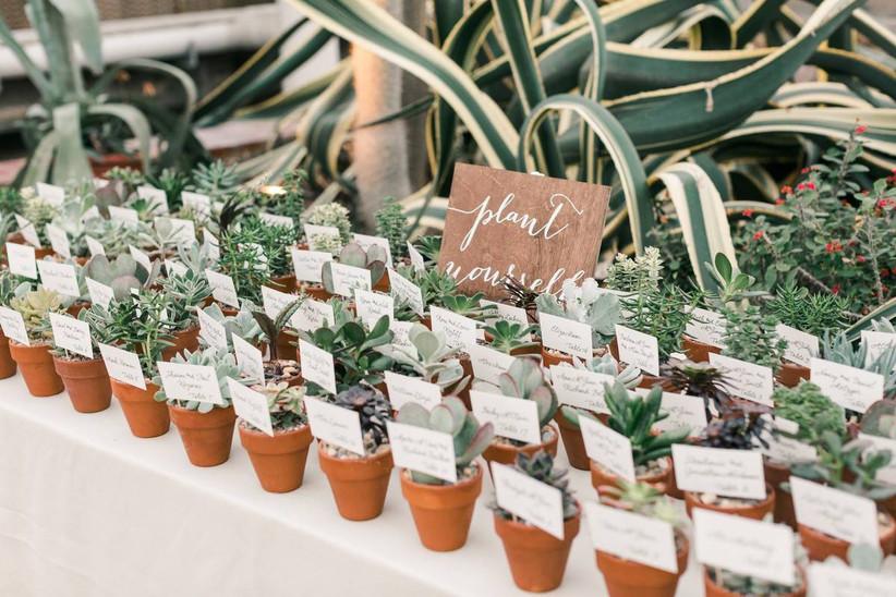 assorted mini succulents in terracotta pots