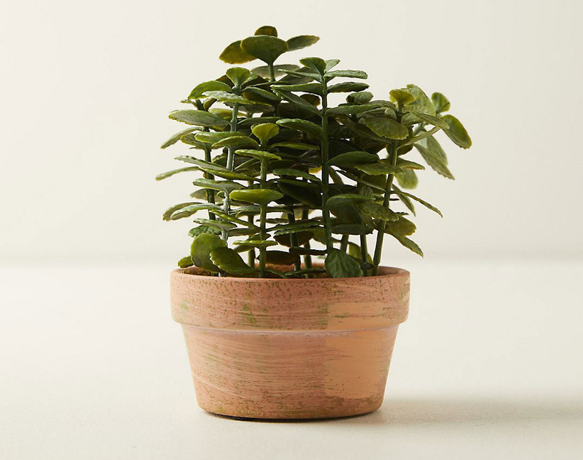 Faux jade plant 35th anniversary gift