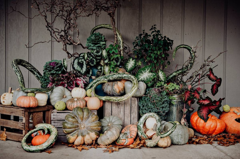 halloween themed wedding idea collection of pumpkins and gourds displayed on table