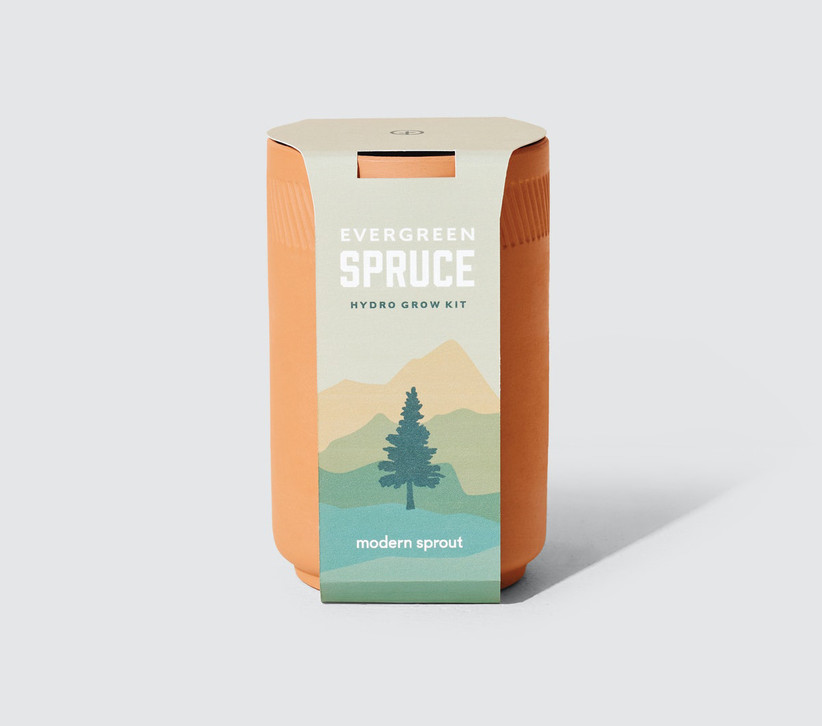 Evergreen spruce tree grow kit in terracotta planter