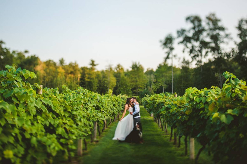 bride and groom kiss in a vineyard while their dog stands next to them