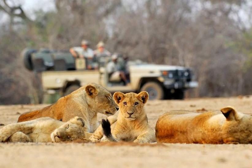 scott dunn luxury travel african safari for 14th year wedding anniversary gift