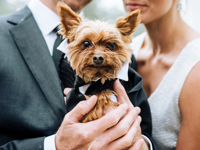 The Cutest Dog Wedding Attire for Your Furry BFF