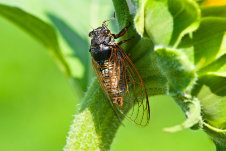 How the Cicadas Might Impact Your Wedding & 4 Things to Do About It