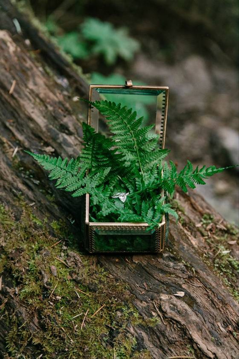 glass ring box with a pear-cut engagement ring displayed on a bed of ferns