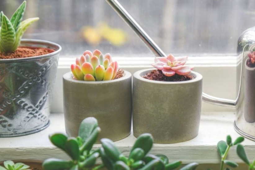 Potted succulents from succulent subscription gift