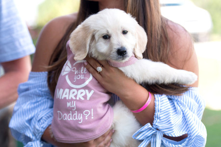 How to Propose with a Puppy (or AnotherPet)