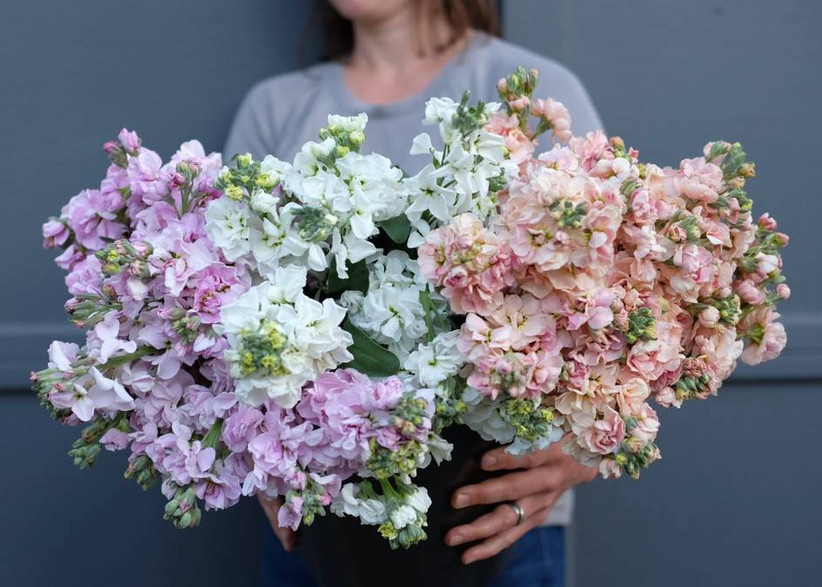 florist holding bucket of white, purple, and pink stock flowers