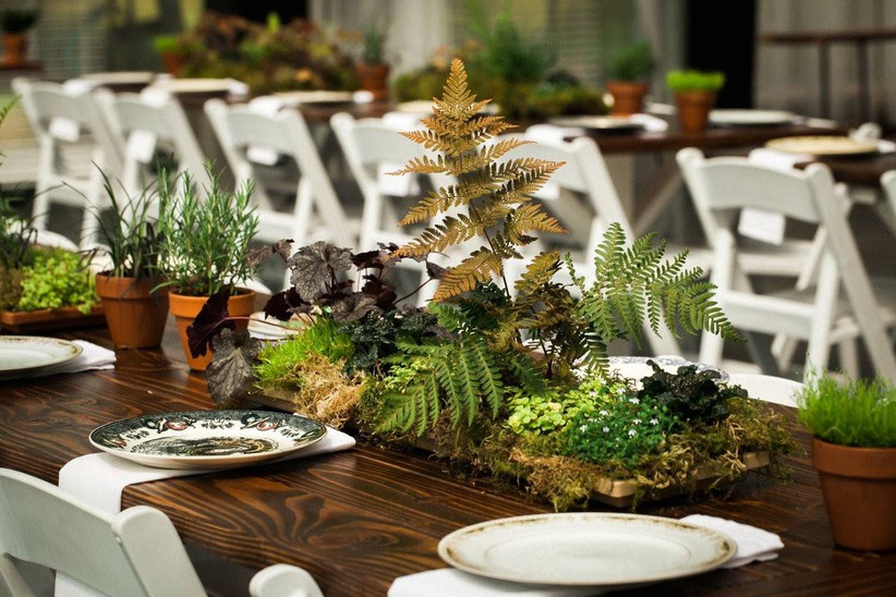 fairy themed wedding centerpiece made with moss, ferns, and potted herb plants