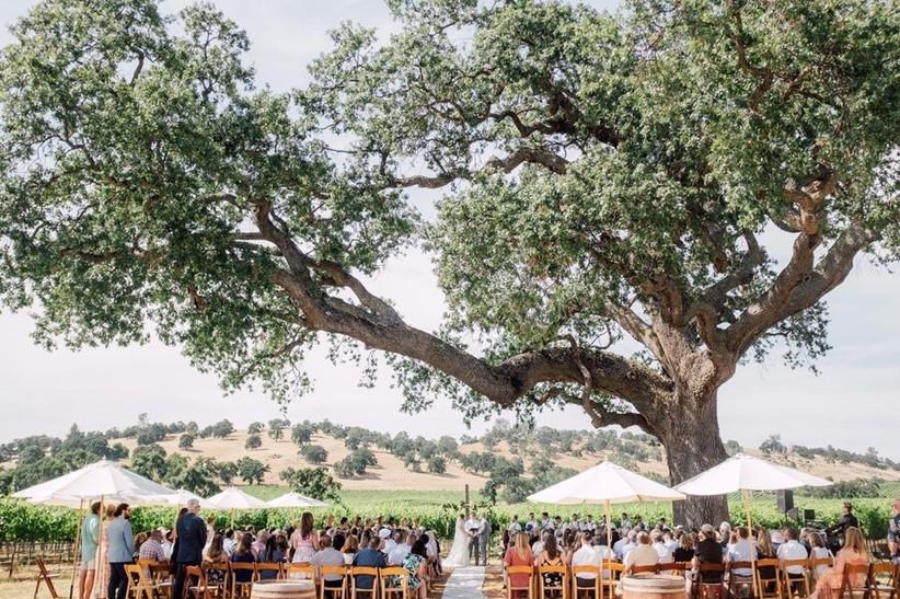 Rancho Victoria Vineyard