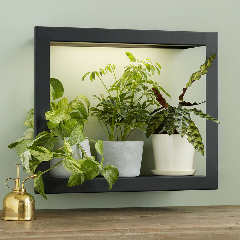 Growlight plant frame gift idea for 16th anniversary