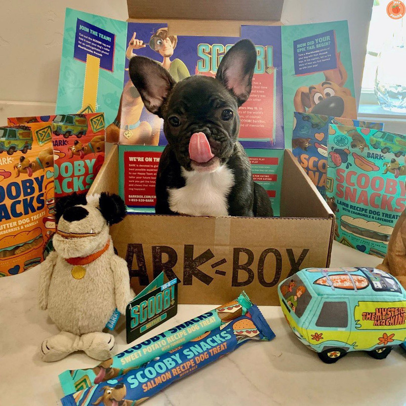 Dog and BarkBox subscription box gift idea for couples with pets