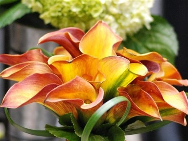 Tmx 1402932176539 Dsc0791 600400 Reston, District Of Columbia wedding florist
