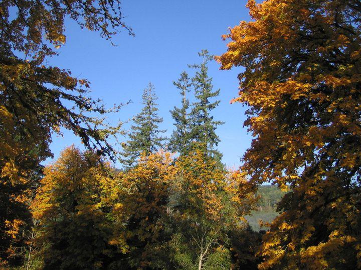 Tmx 1458325409881 Trees With Fall Colors Wsf Chehalis, WA wedding venue
