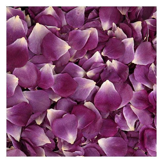 Passionate Purple Petals