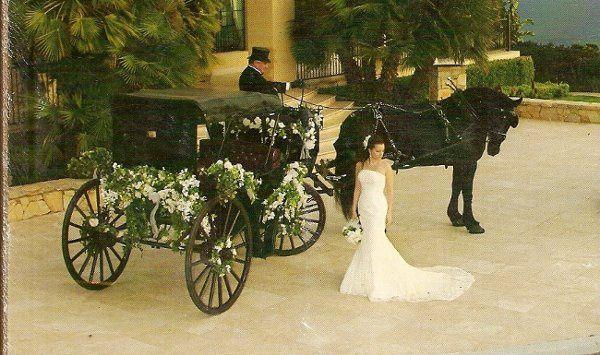Tmx 1225298881390 BlackVis A VisTrumpjpeg0001 Moorpark wedding transportation