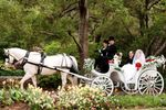 Enchanted Carriages image