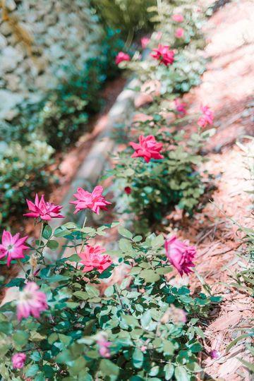 Roses throughout small garden