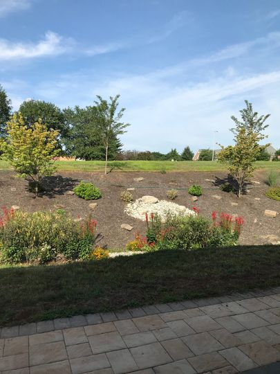 A quick view of the rain gardens