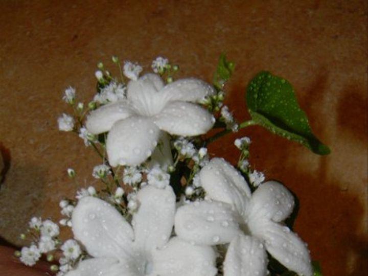 Tmx 1328546529718 DSCN10852 Alexandria wedding florist
