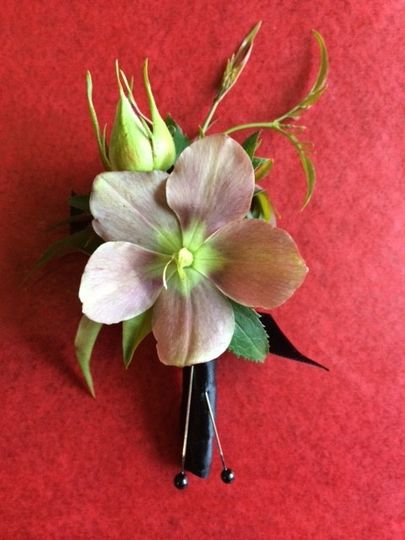 hellebores bout