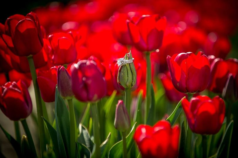 tulips wedding rin