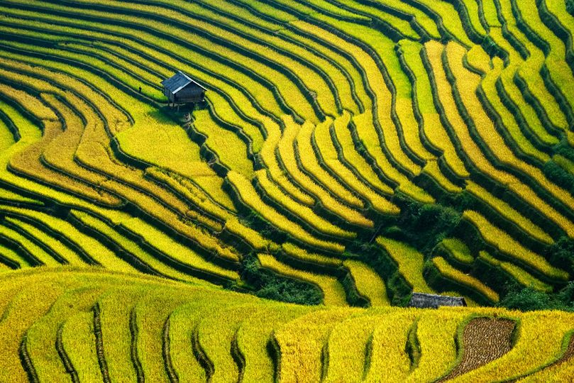 bigstock rice terraced in northern viet 42851461