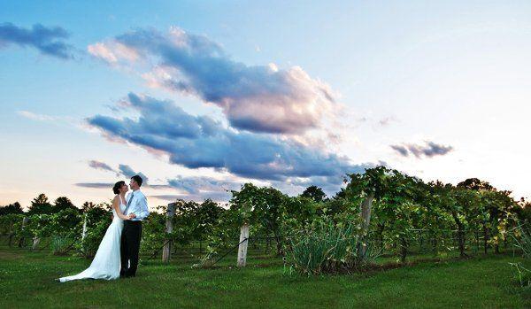 Beauty in the Vineyard