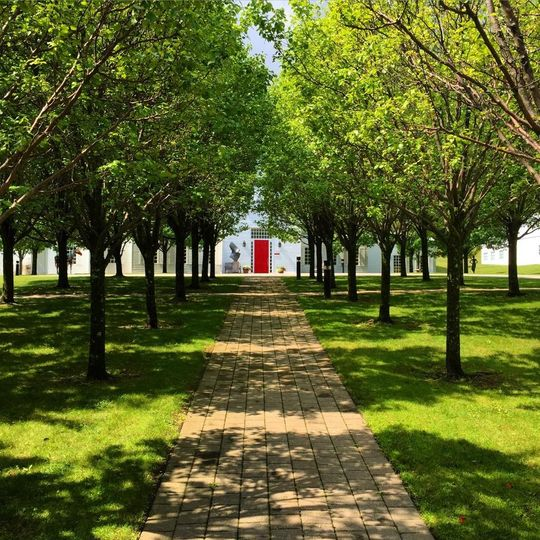 Walkway lined with trees