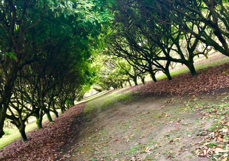 Lychee grove