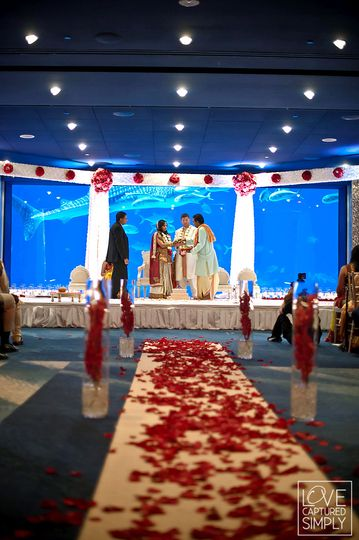 georgia aquarium venue atlanta ga weddingwire