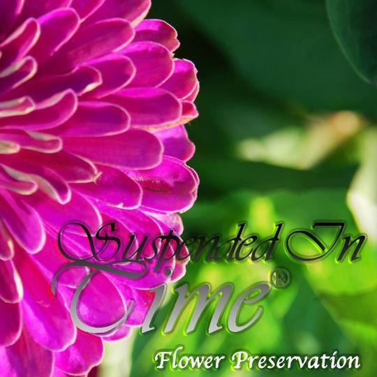 suspended in timer flower preservation