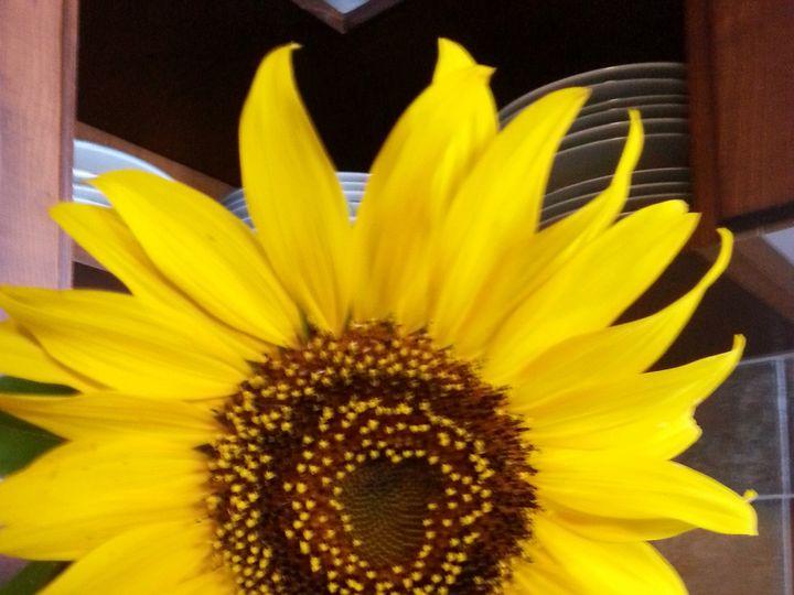 Tmx 1444944984232 20150906144747 Jackson, MI wedding florist