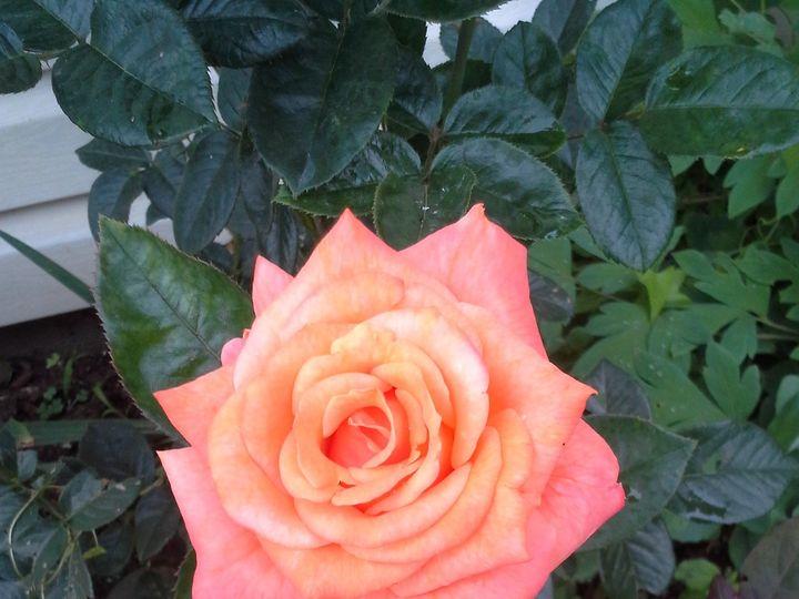 Tmx 1444945438095 20140630081551 Jackson, MI wedding florist