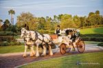 Horse and Carriage Rides and Events image