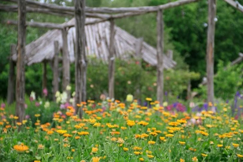 A small flower field