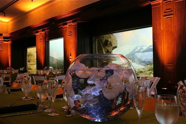 Tmx 1334947714185 NaturalHM5 Fullerton wedding eventproduction