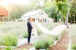 Lavender Oaks Farm image