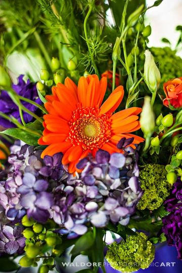 Flowers by Samuel Franklin