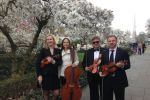 Harmonia Strings image