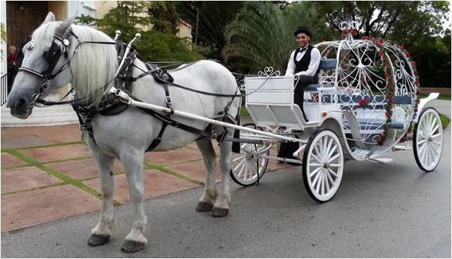 If you want to truly feel like a princess on your wedding day, then a horse and carriage is the...