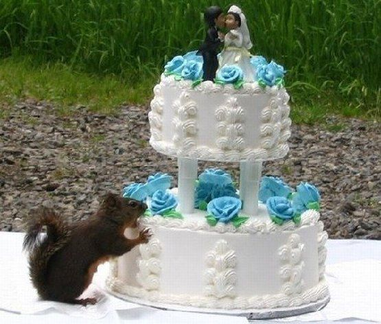 WEDDINGCAKESQUIRREL