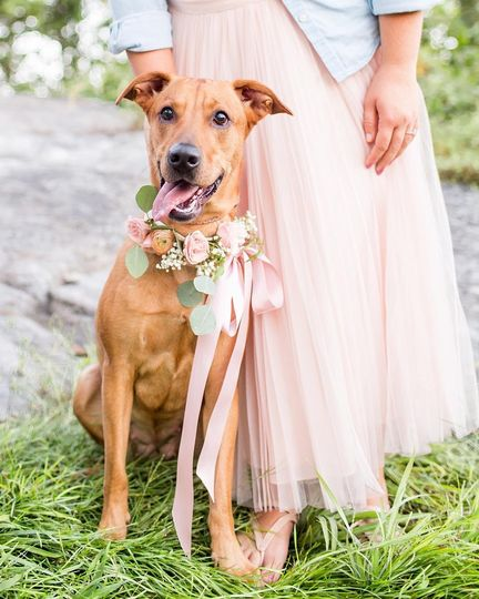 Kid and pet at the wedding