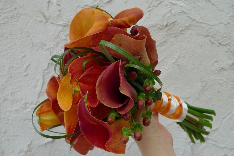 orangemangocallashypericum