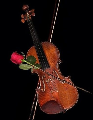 violin with rose 2