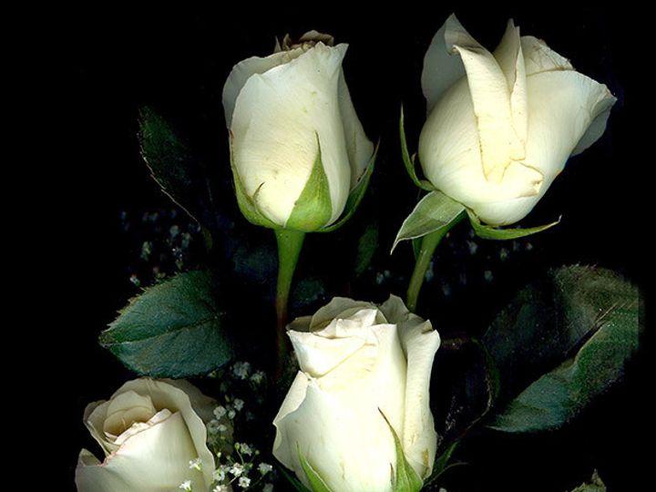 Tmx 1434485786411 Az72 York wedding florist