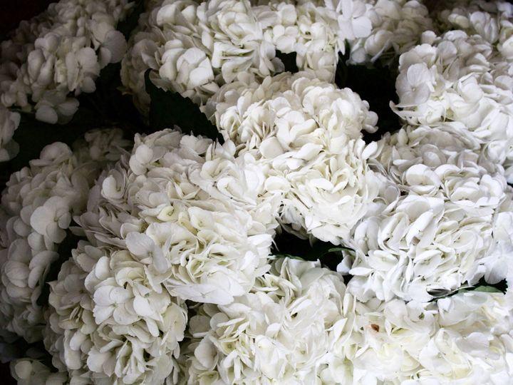 Tmx 1472505930554 Img0501 Frisco, Texas wedding florist