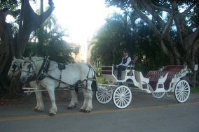 Miami Carriages