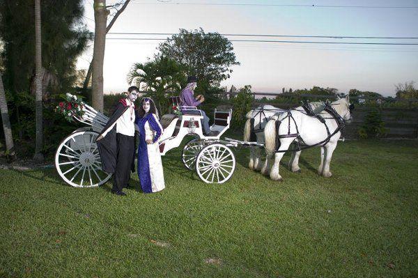Tmx 1294936776921 Cinderellascarriage065 Miami wedding transportation