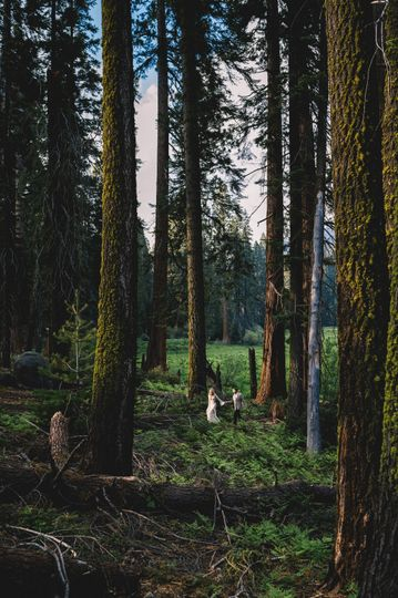 Sequoias  Elopement